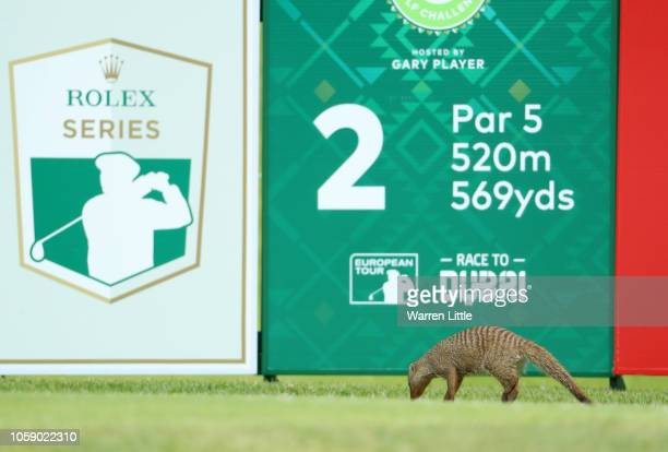 Mongoose is seen on the 2nd tee during day one of the Nedbank Golf Challenge at Gary Player Golf Course on November 8 2018 in Sun City South Africa