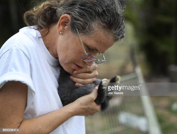 Monica Mitchell from East Coast Rabbit Rescue cares for a rabbit that she caught near Pioneer Canal Park on April 22 2018 in Boynton Beach Florida...