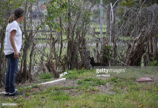 Monica Mitchell from East Coast Rabbit Rescue looks at a rabbit near Pioneer Canal Park on April 22 2018 in Boynton Beach Florida The bunnies are...