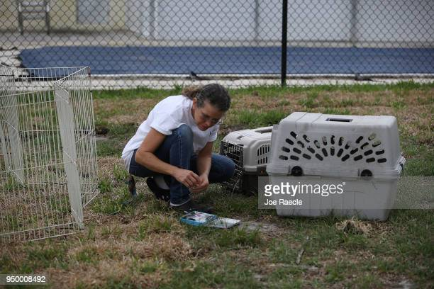 Monica Mitchell from East Coast Rabbit Rescue prepares to round up rabbits near Pioneer Canal Park on April 22 2018 in Boynton Beach Florida The...