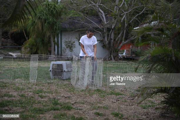 Monica Mitchell from East Coast Rabbit Rescue puts up a corral in the hopes of capturing rabbits in it near Pioneer Canal Park on April 22 2018 in...