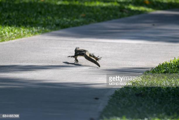 A monitor lizard crosses a walkway during the second round of the 2017 Maybank Malaysia Championship golf tournament at Saujana Golf and Country Club...