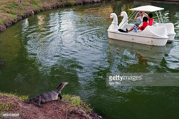 CONTENT] A monitor lizard resting at the Lumphini Park's lake shore as a swan shaped pedal boat with foreign tourists passes by This park offers rare...