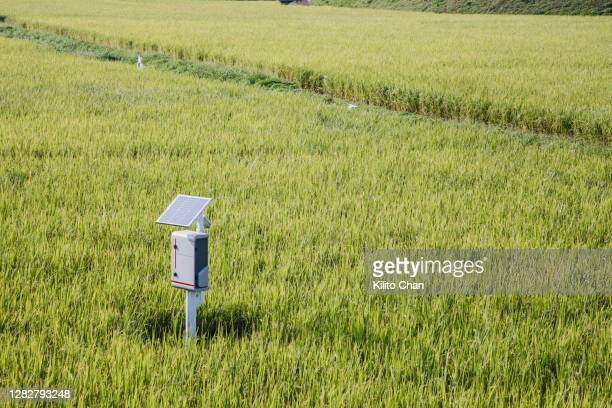 monitoring equipment fueled by solar energy in the paddy field - スマート農業 ストックフォトと画像