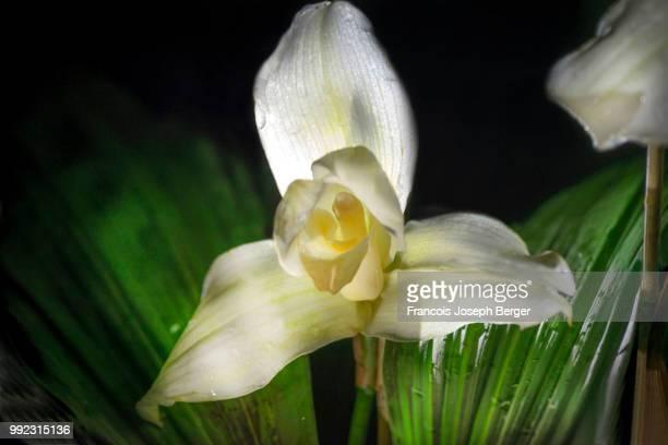 monja blanca - guatemala fotografías e imágenes de stock