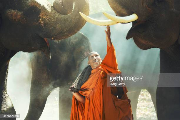 Monk and Elephant at Surin province, Thailand contryside
