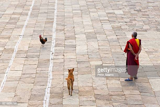 monk at monastry courtyard - peter adams stock pictures, royalty-free photos & images