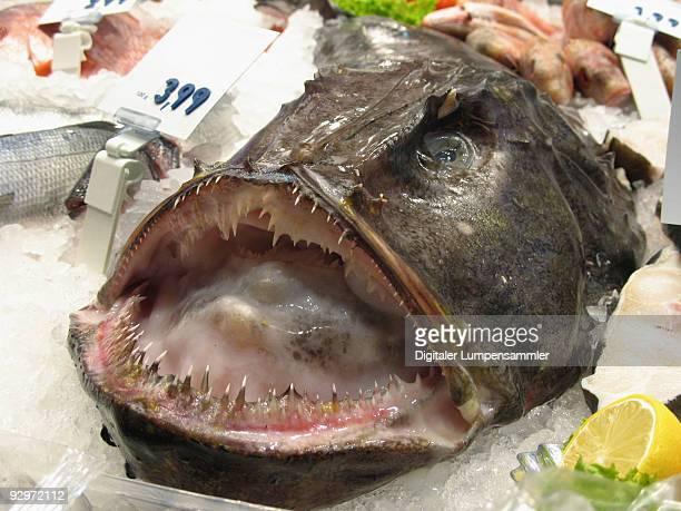 monk fish - アンコウ ストックフォトと画像