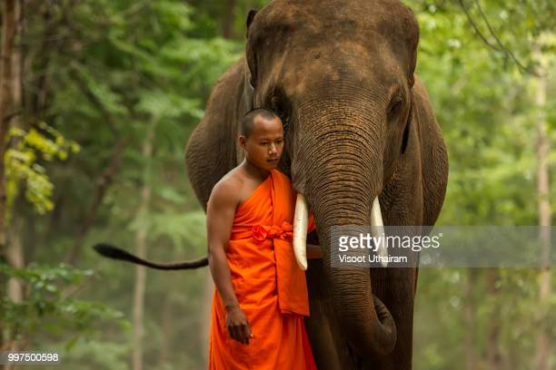Monk with elephant in the forest