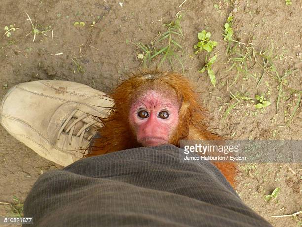 monkey and human foot - monkey shoes stock photos and pictures