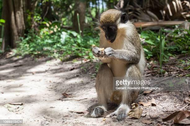 Monkey Behaviour Africa