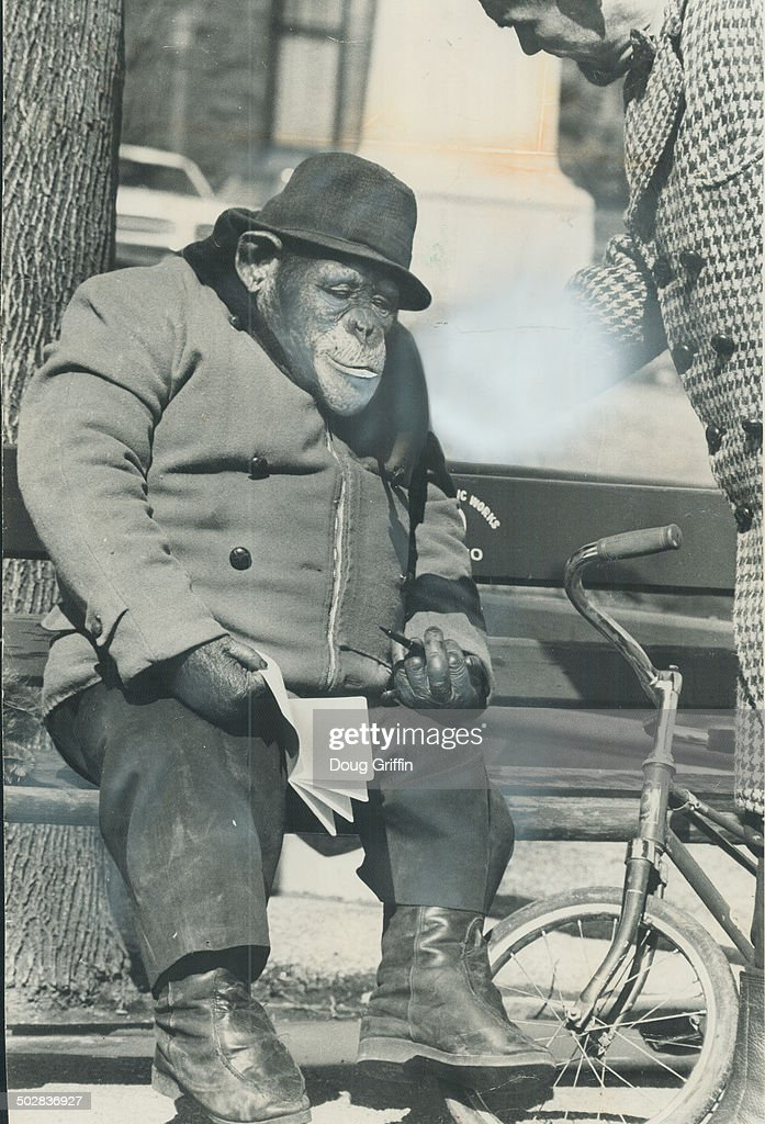 Monkey business in the park. With a hint of spring in the air a young chimp's fancy turns to love - and Heidi is no exception. Parking her bicycle; Heidi lit up a cigarette and settled comfortably on a Queen's Park bench as she prepared to write an ode yesterday.