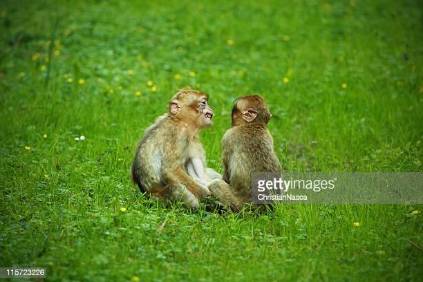 monkey business - grupo mediano de animales - fotografias e filmes do acervo