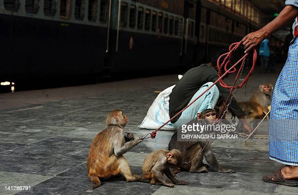 A monkey charmer with his monkeys waits to board a train at a station in Kolkata on March 15 2012 India's railway minister said he aimed to reduce...
