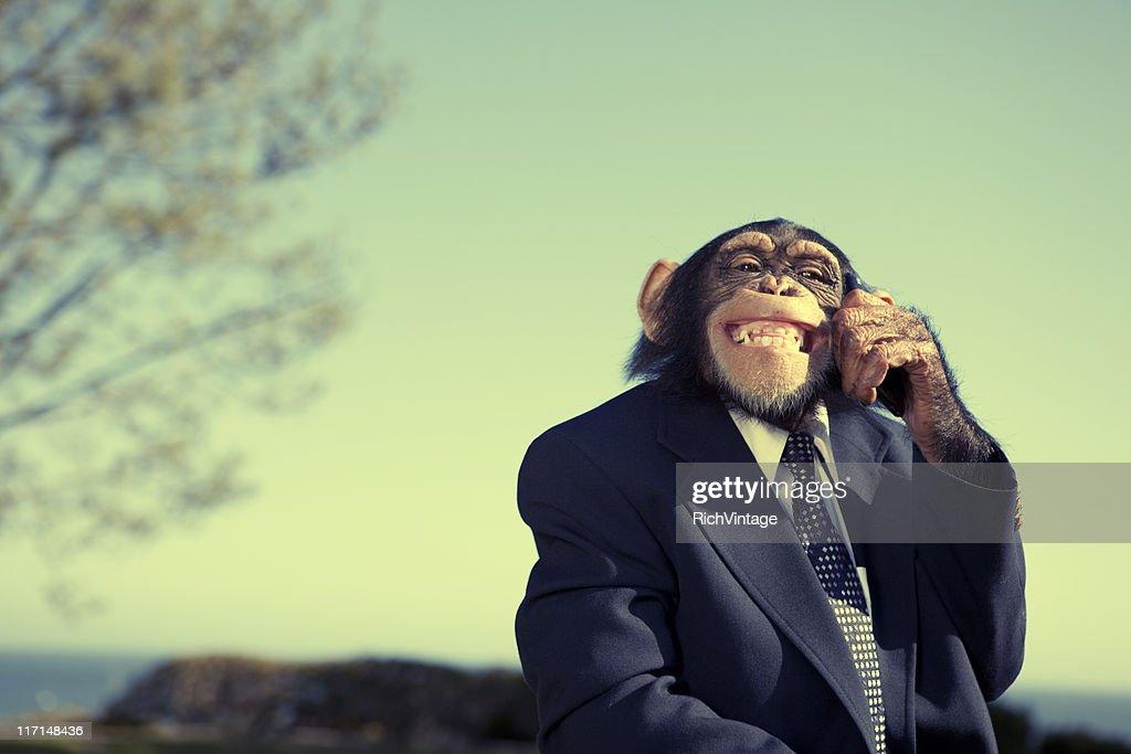 Monkey Communication : Stock Photo