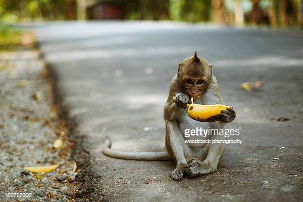 monkey eat banana - primate stock pictures, royalty-free photos & images