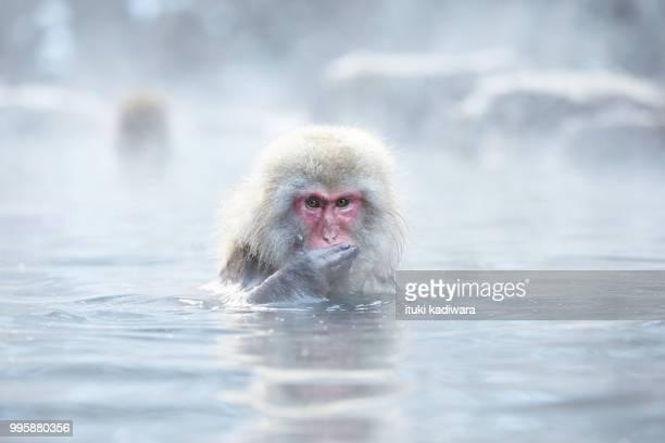 Monkey entering the hot spring
