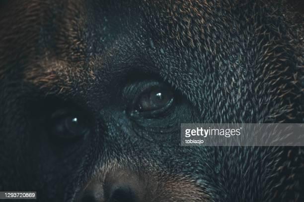 plan rapproché de visage de singe vers le haut - un seul animal photos et images de collection