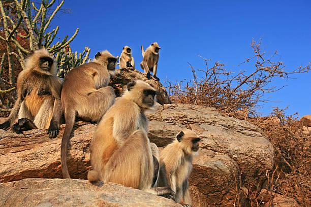 Monkey Family Wall Art