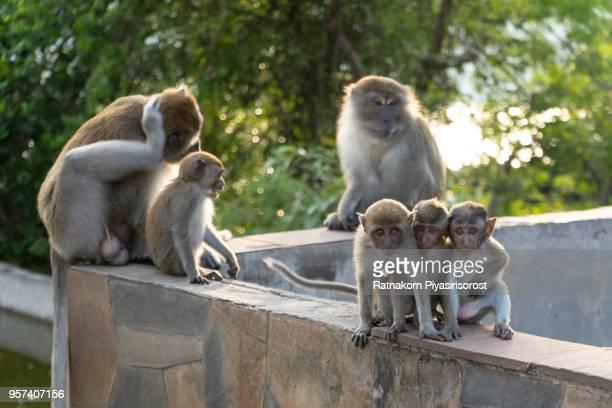 monkey family - mamífero - fotografias e filmes do acervo
