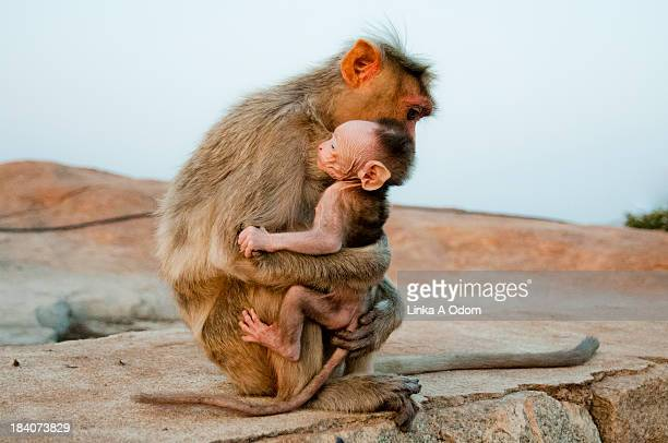 A monkey holding her newborn baby tightly