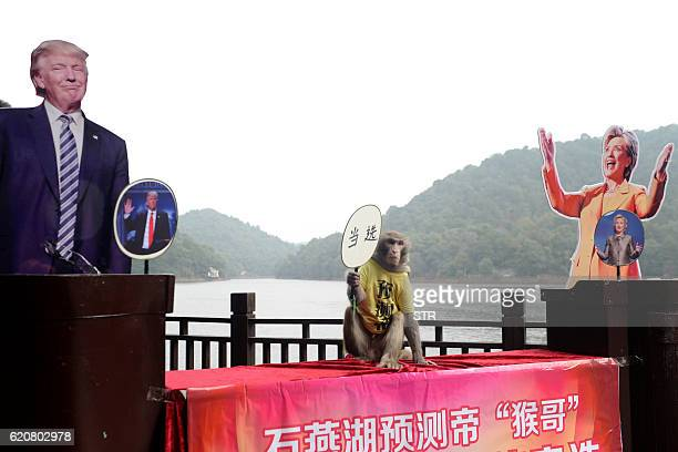 A monkey holds a fan with Chinese characters that read 'elected' as it sits between cardboard cutouts of US Presidential candidates Donald Trump and...