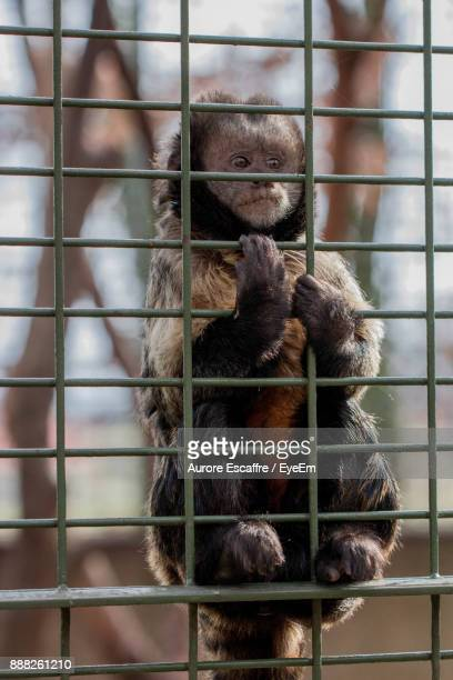 Monkey In Cage At Zoo