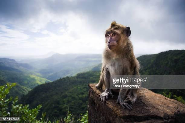 a monkey in front of the jungle - isole mauritius foto e immagini stock