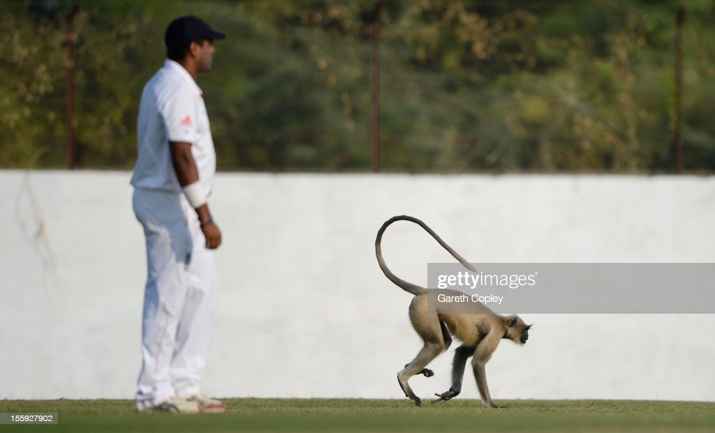 A monkey invades the field during day two of the tour match between England and Haryana at Sardar Patel Stadium ground B on November 9, 2012 in Ahmedabad, India.