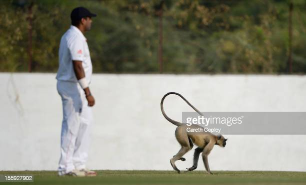 A monkey invades the field during day two of the tour match between England and Haryana at Sardar Patel Stadium ground B on November 9 2012 in...