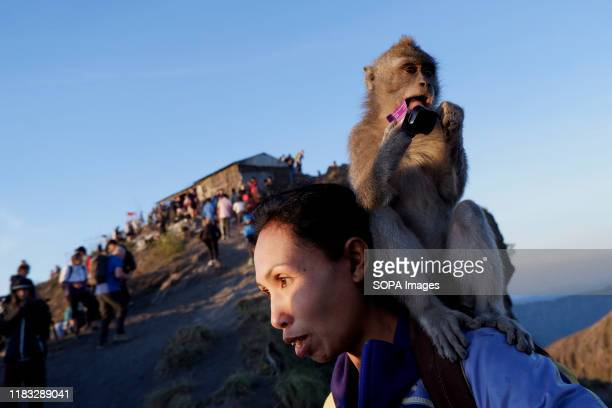 A monkey is seen eating a packet of candy on the back of a hiker at the summit of Mount Batur in Bali during the sunrise A popular tourist...