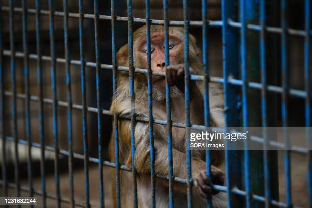 Monkey is seen in an enclosure in Dhaka zoo. Bangladesh National Zoo is located in the Mirpur section of Dhaka, the capital city of Bangladesh. The...