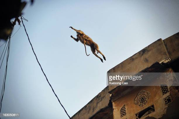 CONTENT] Monkey jumping between roof topMother and kidIndia street