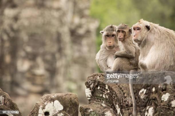 Monkey Koninkrijk