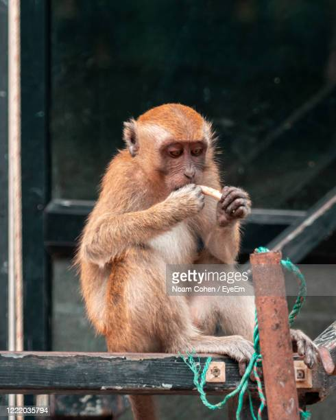 monkey looking away outdoors - noam cohen stock pictures, royalty-free photos & images