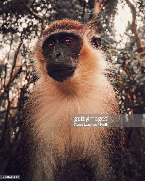 Monkey Looking Away While Sitting Against Trees In Forest