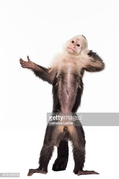 Monkey making an open hand gesture