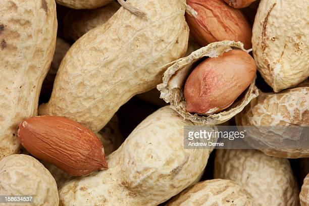 monkey nuts - andrew dernie stock pictures, royalty-free photos & images