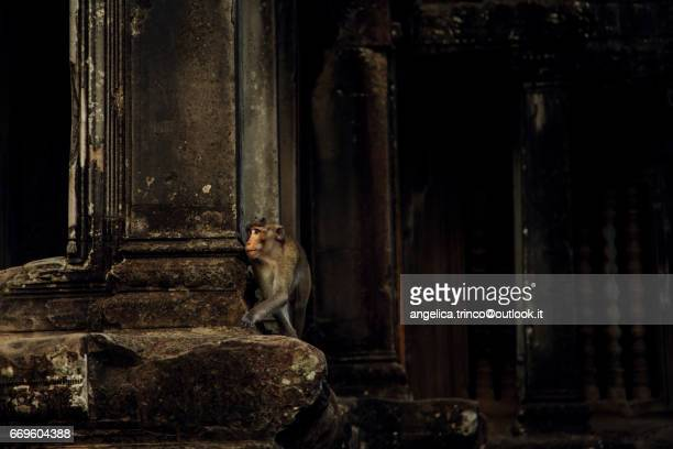 monkey - arte stock pictures, royalty-free photos & images