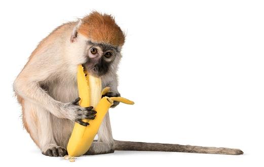 Monkey. 874494906