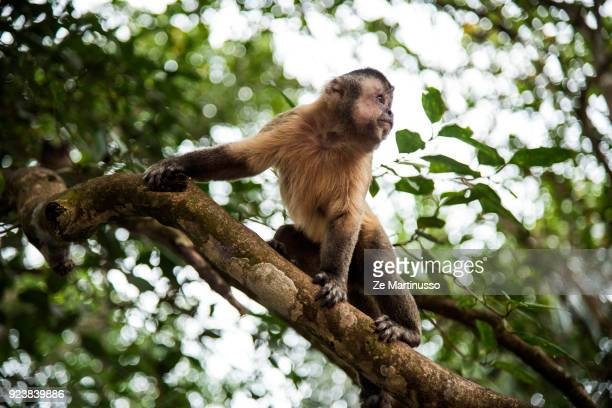 monkey branch dating dating someone in their first relationship