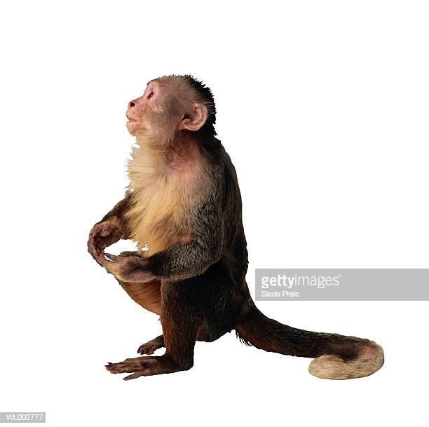 monkey - 一匹 ストックフォトと画像