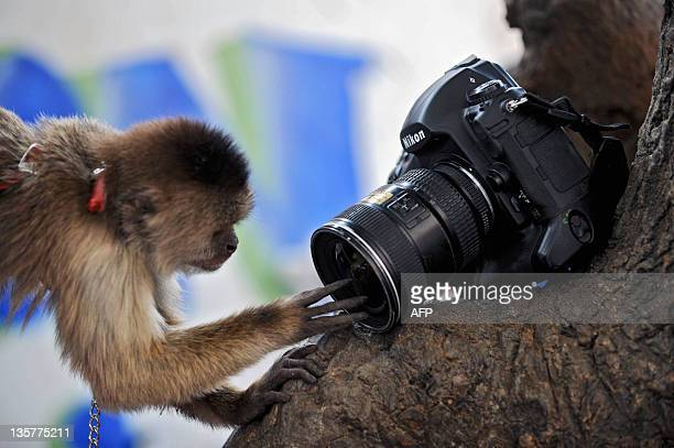 A monkey plays with a camera during a championship of street boxing in 23 de Enero neighborhood Caracas on March 13 2010 AFP PHOTO / Miguel Gutierrez
