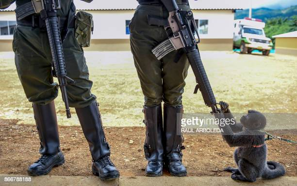 A monkey plays with the rifle of a Colombian police woman in an unarmed zone known as territorial spaces of training and reincorporation where former...