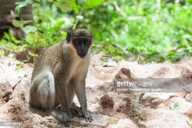 Monkey Portrait amongst Ant Hills