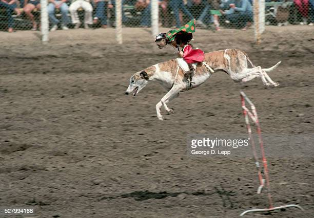 Monkey Riding Greyhound at Rodeo