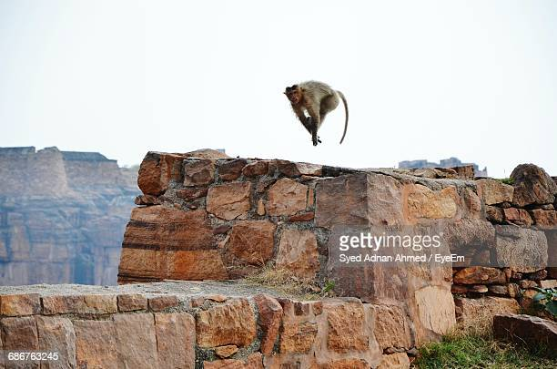 monkey running over retaining wall against sky - adnan syed stock pictures, royalty-free photos & images