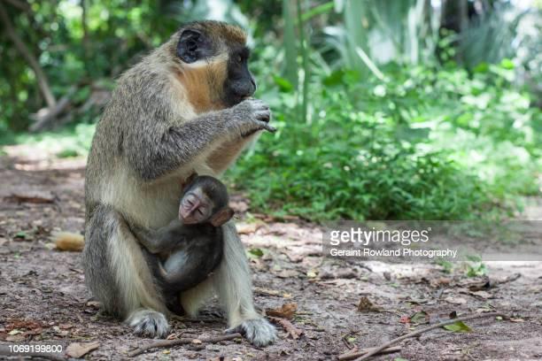 Monkey Sanctuary, Africa