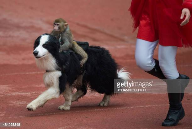 A monkey sits on a dog during a show at the Wild Animal Park one of the main tourist attractions during the Chinese Lunar New Year holidays in...