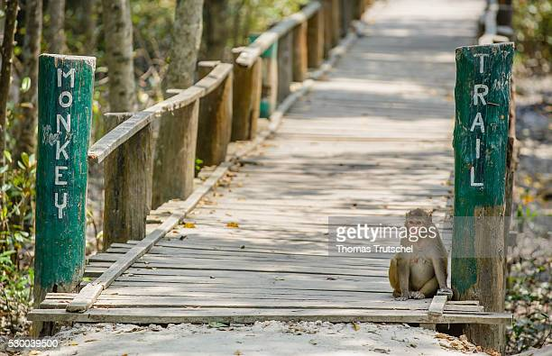 A monkey sitting in Caramel Ecotourism Centre at the entrance of the Monkey Trail on April 12 2016 in Mongla Bangladesh